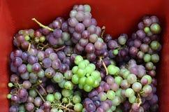 Weinherstellungsprozeß Lizenzfreie Stockbilder