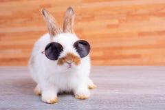 Weinig aanbiddelijk konijntjeskonijn met zonglazen blijft op grijze lijst met bruin houten patroon als achtergrond stock fotografie