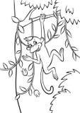Weinig aap die op de boom slingeren Stock Afbeelding