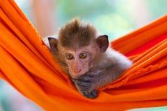 Weinig aap in een hangmat stock afbeeldingen