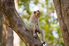 Weinig Aap op boom in Thailand Stock Afbeelding