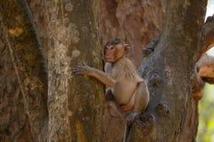 Weinig Aap op boom in Thailand Stock Foto's