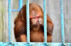 Weinig aap is opgesloten in een dierentuin stock fotografie
