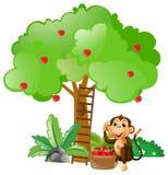 Weinig aapzitting onder appelboom stock illustratie
