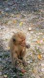 Weinig baby-aap in aapbos van Ubud, Bali, Indonesië stock foto