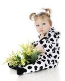 Weinig Baby Moo Moo royalty-vrije stock foto's