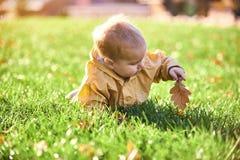Weinig babyjongen die onder de gevallen bladeren op het groene gazon kruipen bij zonnige dag stock foto's