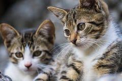 Weinig babykatten Stock Afbeeldingen