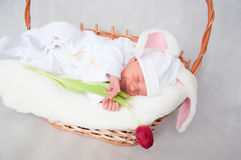 Weinig babykonijn Stock Foto's