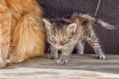 Weinig bang gemaakte katjestribunes naast mamma-kat stock fotografie