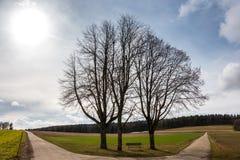 Weinig bank tussen hoge bomen bij kruispunten met gebieden en weiden dichtbij het bos royalty-vrije stock afbeeldingen