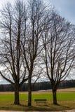 Weinig bank tussen hoge bomen bij kruispunten met gebieden en weiden dichtbij het bos royalty-vrije stock afbeelding