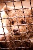 Weinig beer in dierentuin Royalty-vrije Stock Afbeelding