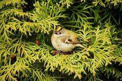 Weinig birdy Royalty-vrije Stock Foto's