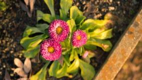 Weinig bloem in mijn de installatie Stock Foto's
