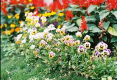 Weinig bloem Taiwan Stock Afbeeldingen