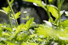 Weinig bloem tussen bladeren royalty-vrije stock foto's