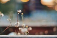 Weinig bloemwijnoogst Stock Foto