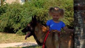 Weinig blond meisje streelt een Belgische herdershond stock footage