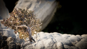 Weinig bonsaiboom Royalty-vrije Stock Fotografie