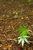 Weinig boom in bos Stock Afbeeldingen