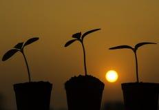 Weinig boom in de zonsondergang stock afbeelding
