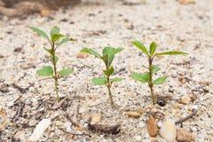 Weinig boom groeit Stock Fotografie