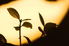 Weinig boom in het licht Stock Foto's