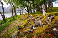 Weinig bos dichtbij Kilchurn-Kasteel royalty-vrije stock afbeeldingen
