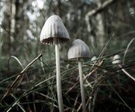 Weinig bos schiet als paddestoelen uit de grond Stock Afbeeldingen
