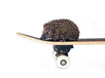 Weinig bosegel op een geïsoleerd skateboard Royalty-vrije Stock Foto