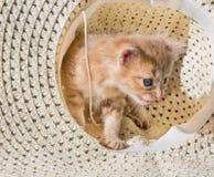 Weinig boze katjeszitting in een witte hoed stock foto
