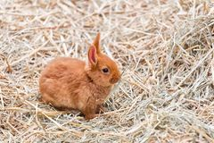 Weinig bruin konijntje Royalty-vrije Stock Afbeeldingen