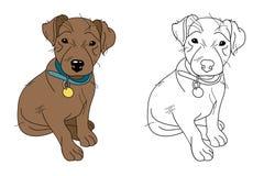 Weinig bruin puppy dat blauwe halsband draagt Stock Foto
