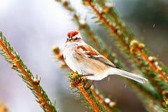 Weinig bruine en witte vogel met gele eigenschap Royalty-vrije Stock Fotografie
