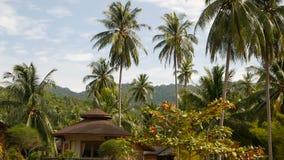 Weinig bungalow die zich onder kokospalmen bevinden Comfortabel die huis door tropische uitheemse gewassen op idyllische achtergr stock videobeelden