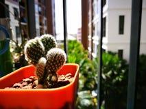 Weinig cactus in de pot bij flatgebouw met koopflatsbalkon stock afbeeldingen
