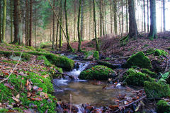 Weinig creeck in de Belgische Ardennen stock afbeeldingen