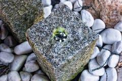 Weinig die fontein van steen in de tuin wordt gemaakt Stock Afbeelding