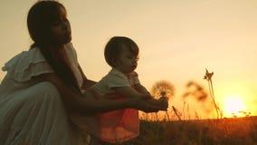 Weinig dochter en moeder spelen in park bij zonsondergang de baby rekt zijn handen aan een paardebloem uit gelukkige familiereize stock videobeelden