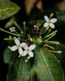 Weinig drie witte bloemen in de tuin royalty-vrije stock afbeeldingen