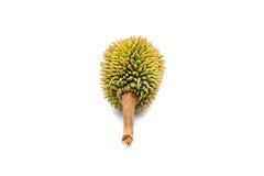 weinig durian Royalty-vrije Stock Afbeelding