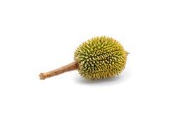 weinig durian Royalty-vrije Stock Afbeeldingen