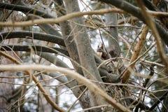 Weinig eekhoorn die een bananeschil in een boom eten stock foto's