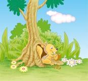 Weinig eekhoorn die hazelnoot eten Stock Foto