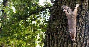 Weinig eekhoorn het spelen in het park royalty-vrije stock afbeeldingen