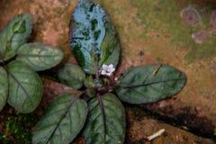 Weinig eenzame witte bloem groeit vreedzaam ter plaatse Stock Foto