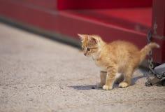 Weinig geel katje in de straat Nieuwsgierige kleine kat Leuk en mooi katje stock afbeeldingen