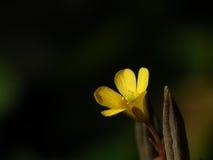 Weinig gele bloem stock afbeeldingen