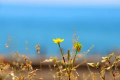 Weinig gele bloem en overzees in de zomer zonnige dag Stock Afbeeldingen